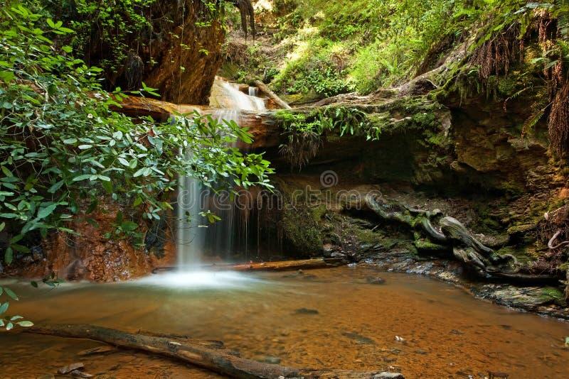 Silver Falls on Berry Creek Trail, Big Basin, CA stock photo
