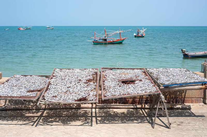 Silver fish drying in racks next to the sea in Thailand stock images