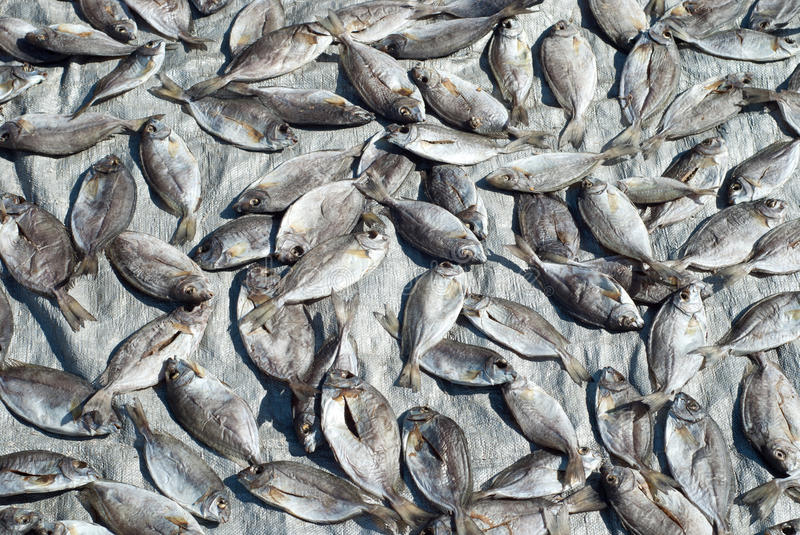 Download Silver Fishes Drying On Silver Background Stock Image - Image of southeast, ground: 15574551