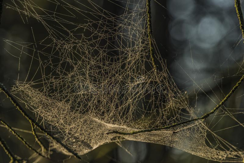 Silver and gold cobweb near Kladska pond royalty free stock photos