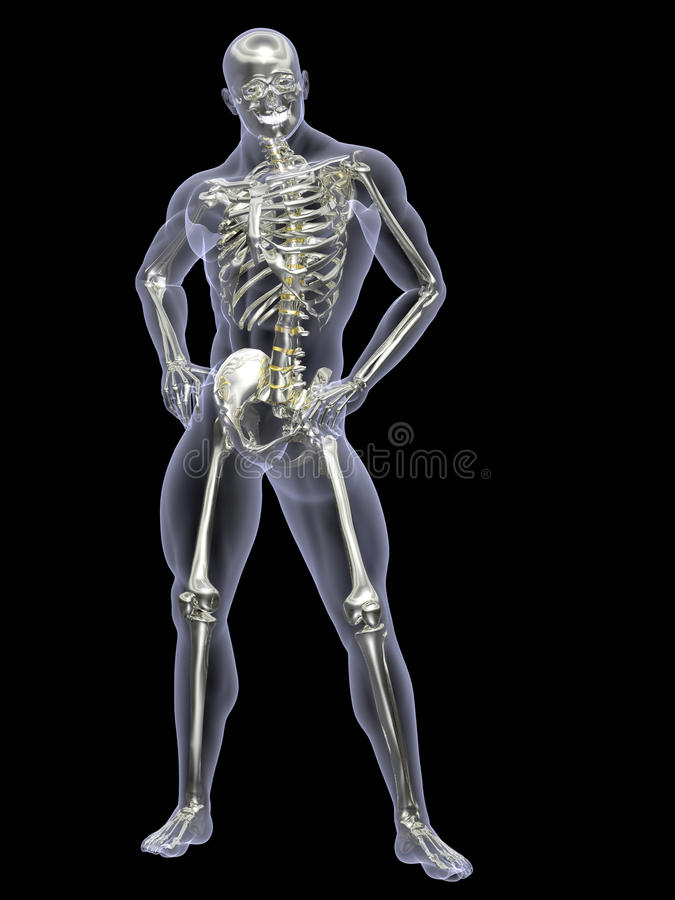 Silver And Gold Skeleton X-Ray Royalty Free Stock Photos