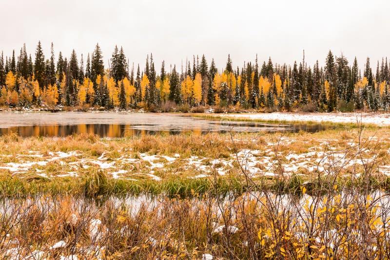 Silver Lake und Sumpf mit einem frühen Fall schneien herauf große Pappel-Schlucht lizenzfreies stockfoto