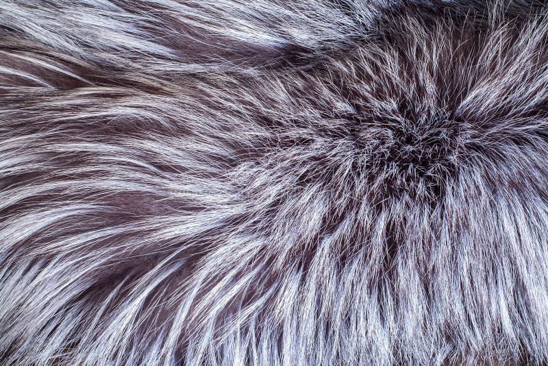 Silver natural Animal fur texture background closeup.  stock photos