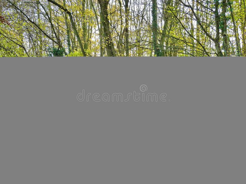 Silver Porsche 911 Convertible Free Public Domain Cc0 Image