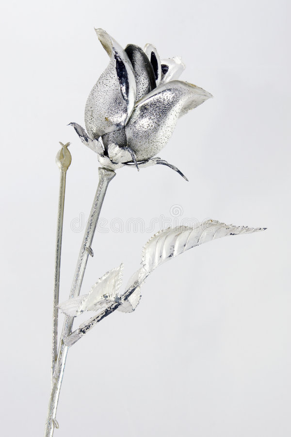 Silver rose royalty free stock image