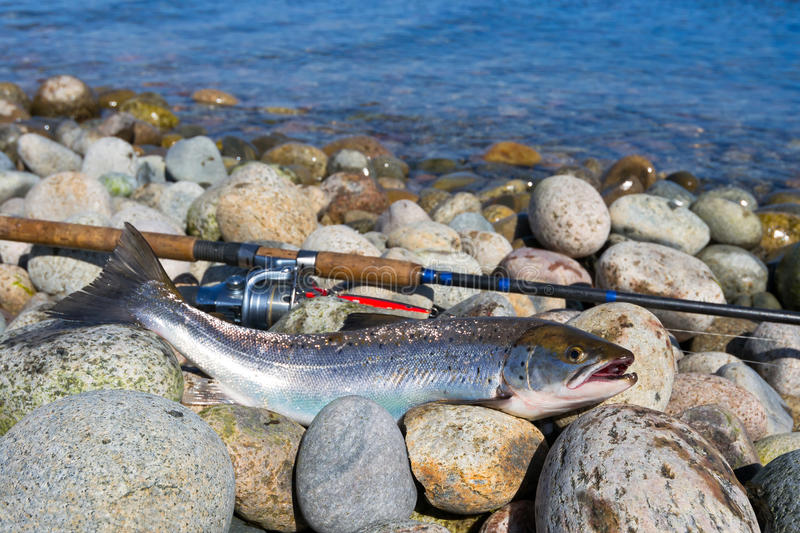 Download Silver Sea Trout Fishing Trophy Stock Photo - Image: 39811524