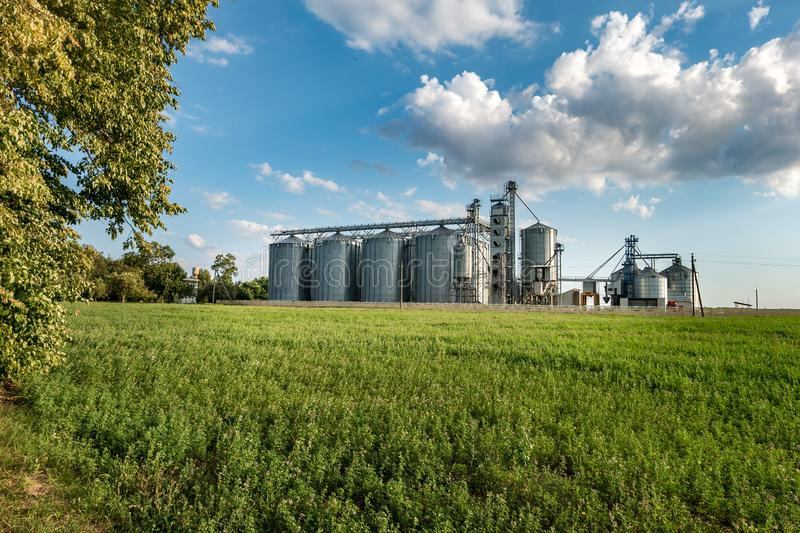 Silver silos on agro manufacturing plant for processing drying cleaning and storage of agricultural products, flour, cereals and royalty free stock photos