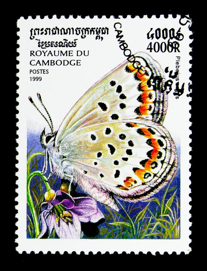 Silver-studded Blue Plebeius argus, Butterflies serie, circa 1999. MOSCOW, RUSSIA - NOVEMBER 24, 2017: A stamp printed in Cambodia shows Silver-studded Blue stock image