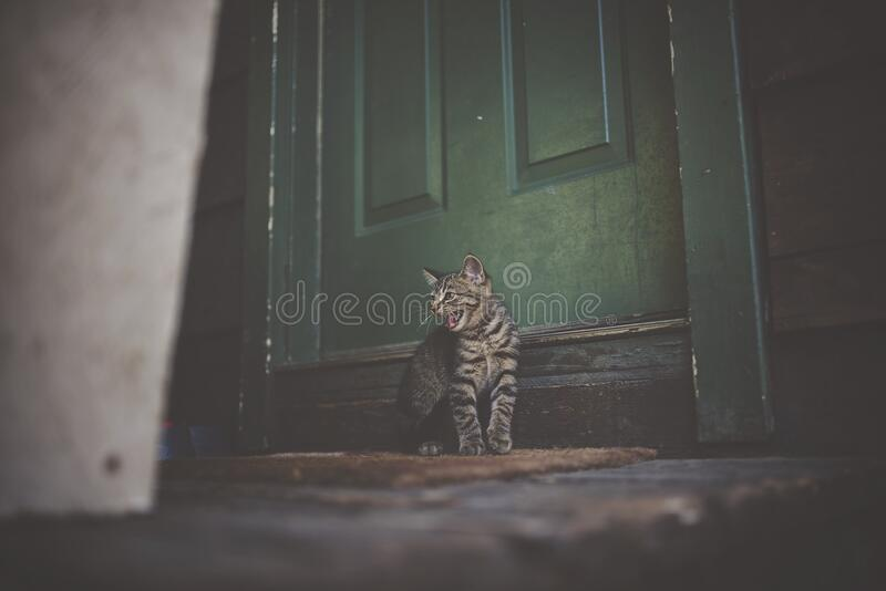 Silver Tabby Cat on Brown Doormat stock images