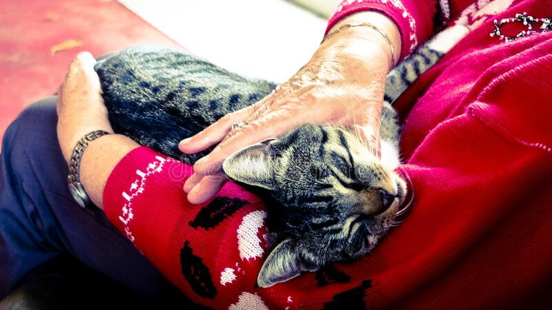 Silver Tabby Cat Sleeping On Person Hand Free Public Domain Cc0 Image
