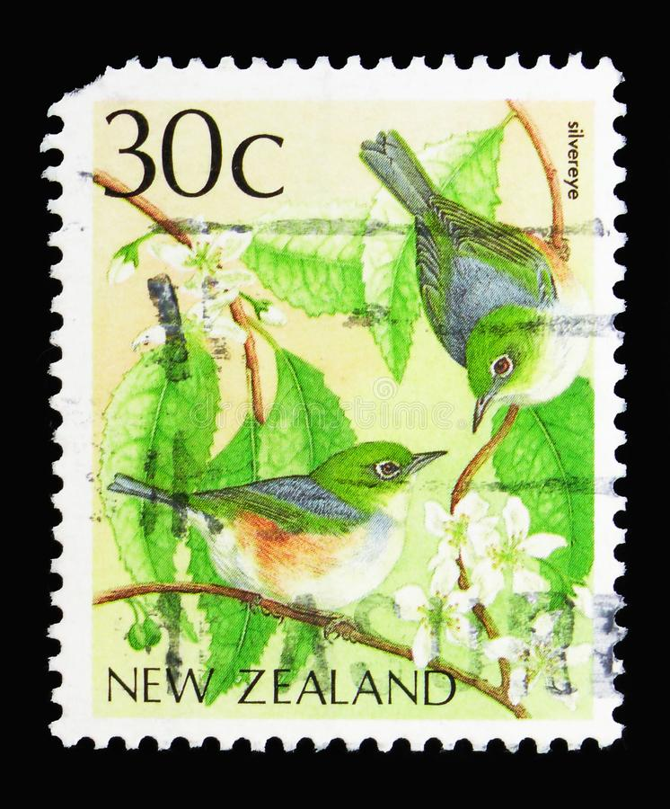 Silvereye, Воск-глаз (lateralis) Zosterops, serie птиц, около 19 стоковые изображения