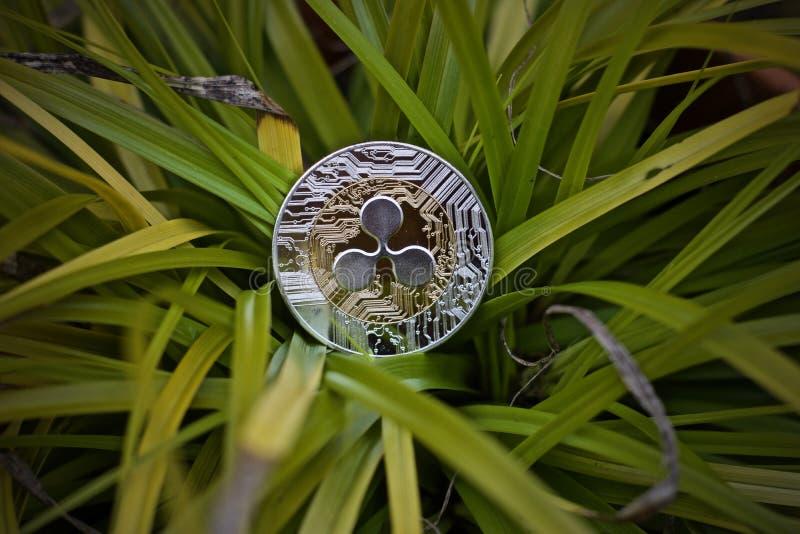 Silverkrusningsmynt royaltyfri foto