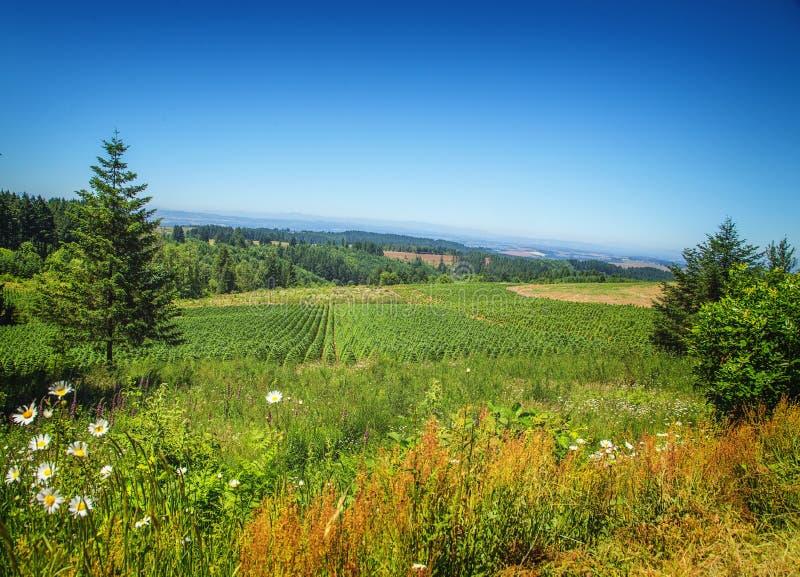 Silvernedgångar, Oregon royaltyfri fotografi