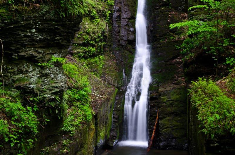 Silverthread понижается в свежий зеленый цвет весны стоковые фотографии rf