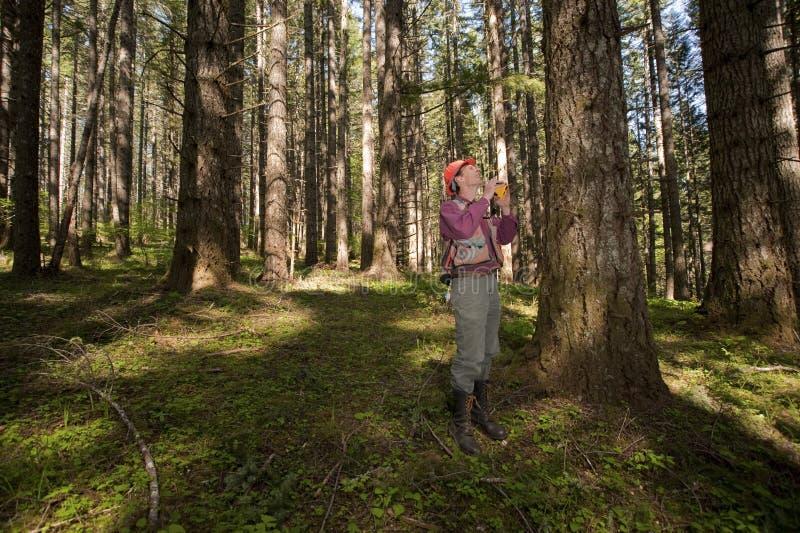 Silvicultor en un noroeste pacífico fotografía de archivo