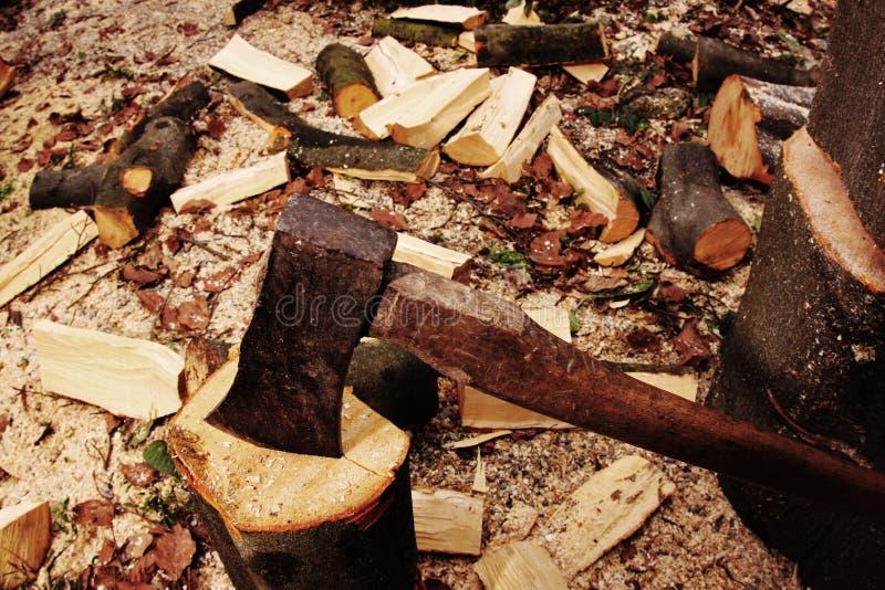 Silvicultor que taja la madera con un hacha imagen de archivo libre de regalías