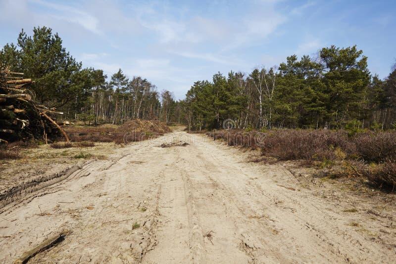Silvicultura - camino forestal en una madera fotografía de archivo