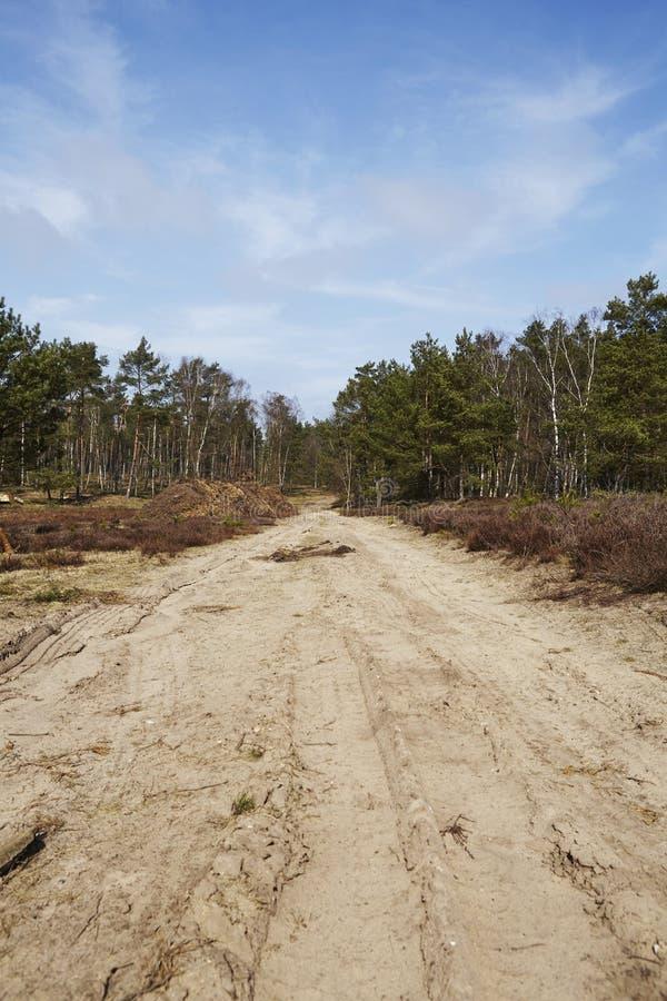 Silvicultura - camino forestal en una madera fotos de archivo libres de regalías