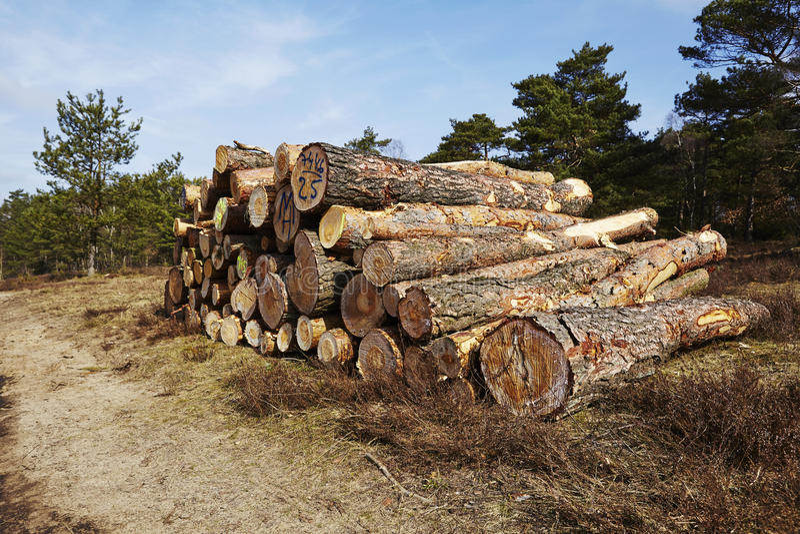 Silvicultura - pila de troncos del árbol imagen de archivo libre de regalías