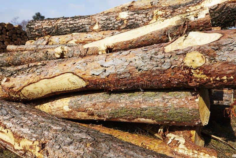 Silvicultura - pila de troncos del árbol fotos de archivo