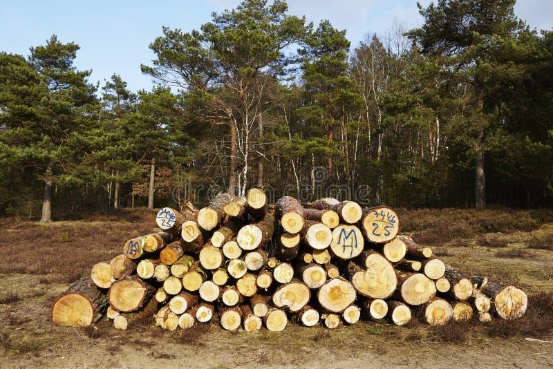 Silvicultura - pila de troncos del árbol fotos de archivo libres de regalías