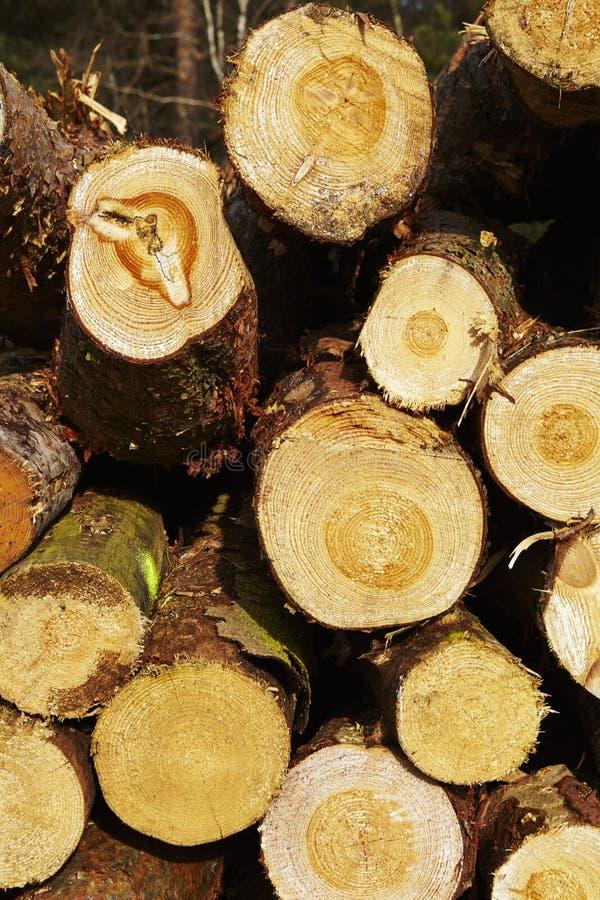 Silvicultura - pila de troncos del árbol foto de archivo
