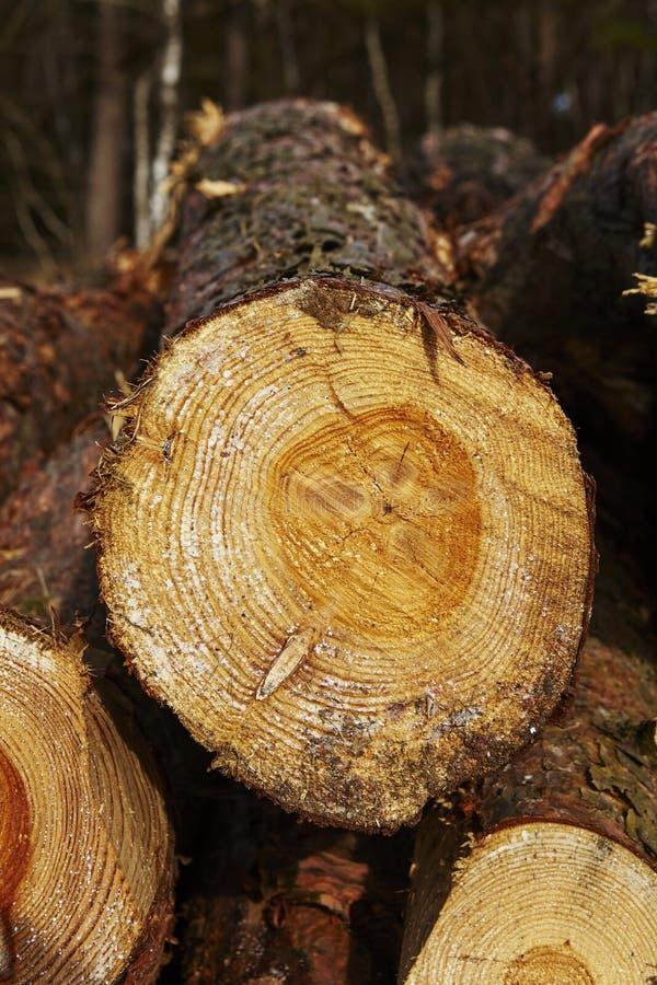 Silvicultura - pila de troncos del árbol imágenes de archivo libres de regalías