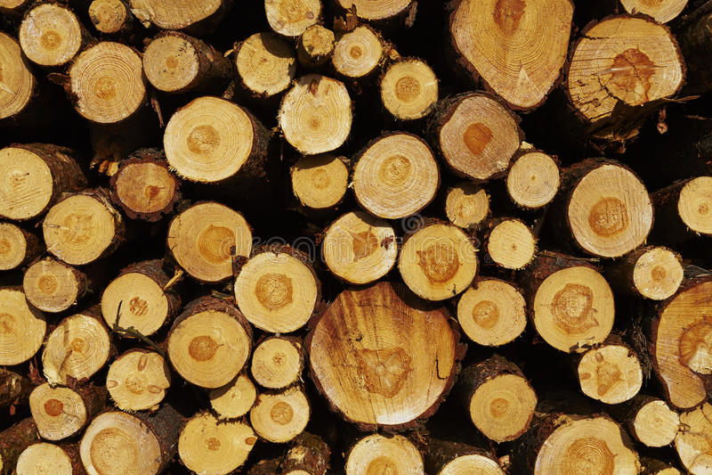 Silvicultura - pila de troncos del árbol imagen de archivo
