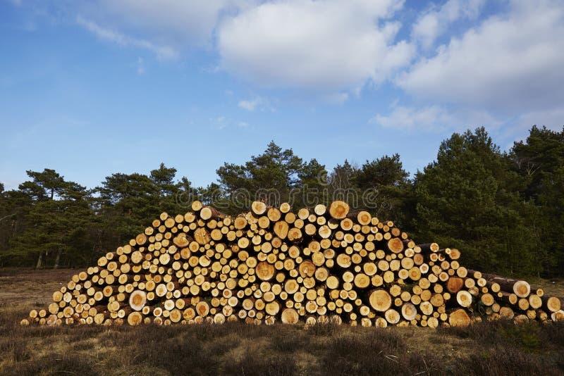 Silvicultura - pila de troncos del árbol fotografía de archivo libre de regalías