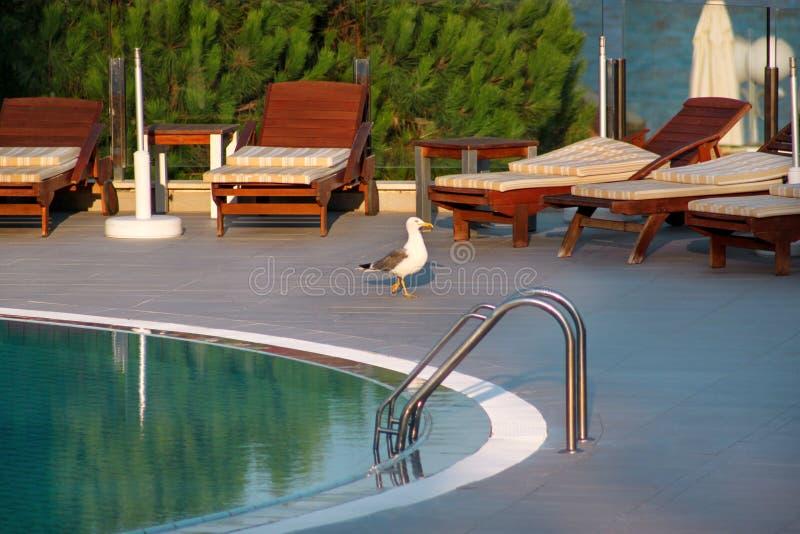 Simbassäng av det lyxiga feriehotellet och att förbluffa sikten och platsen av seagullen som bara tycker om Koppla av nära pöl me royaltyfri fotografi