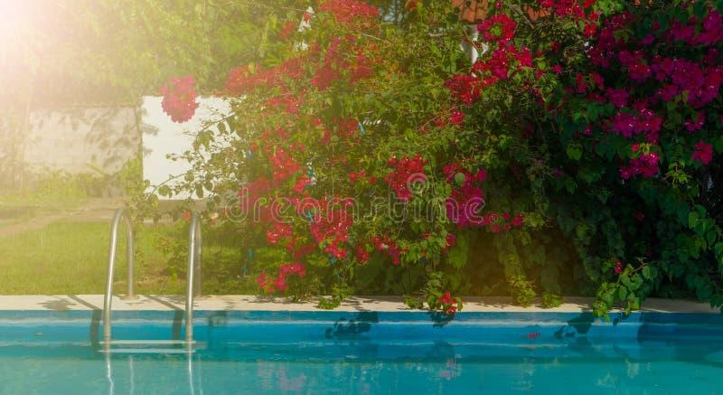 Simbassäng med magentafärgade blommor arkivfoto