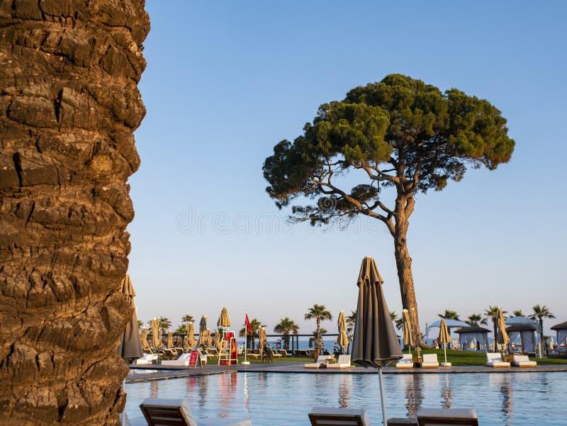 Simbassäng mot den blåa himlen och ett stort träd En tropisk semester i ett lyxigt strandhotell, en lyxig tur arkivfoto