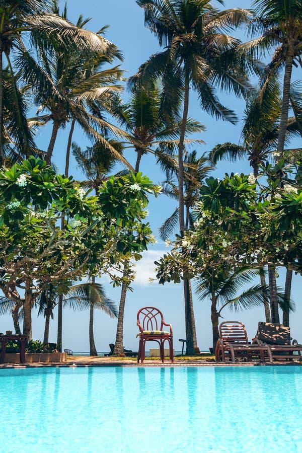 Simbassäng, palmträd och blå himmel royaltyfri fotografi