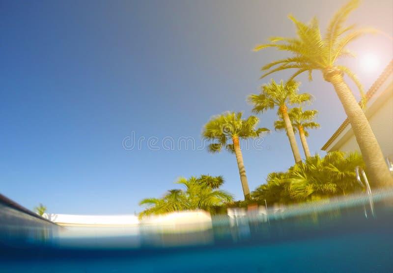 Simbassäng, palmträd och solig blå himmel arkivfoto