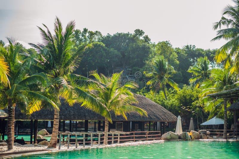 Simbassäng, palmträd och tropiska byggnader med det halmtäckte taket arkivfoton