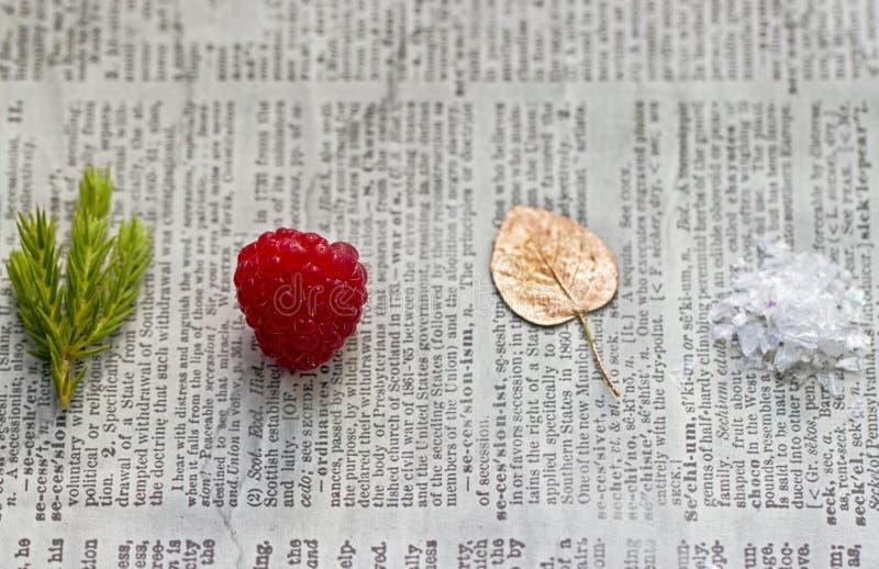 Simboli delle quattro stagioni immagine stock libera da diritti