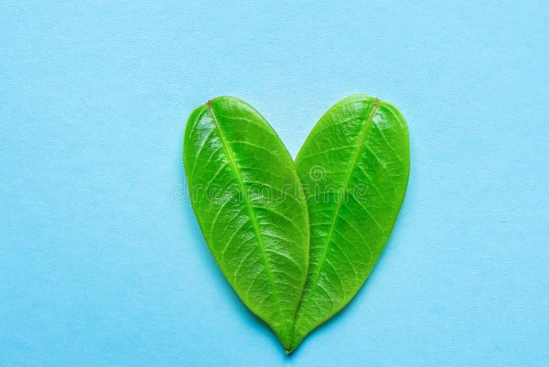 Simbolo del cuore fatto dalle giovani foglie verdi dell'albero su fondo blu-chiaro Vegano romantico dell'ambiente di amore di gio immagini stock