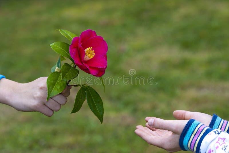 Souvent Simbolo Di Amicizia E Di Amore Immagine Stock - Immagine: 19407273 YE53