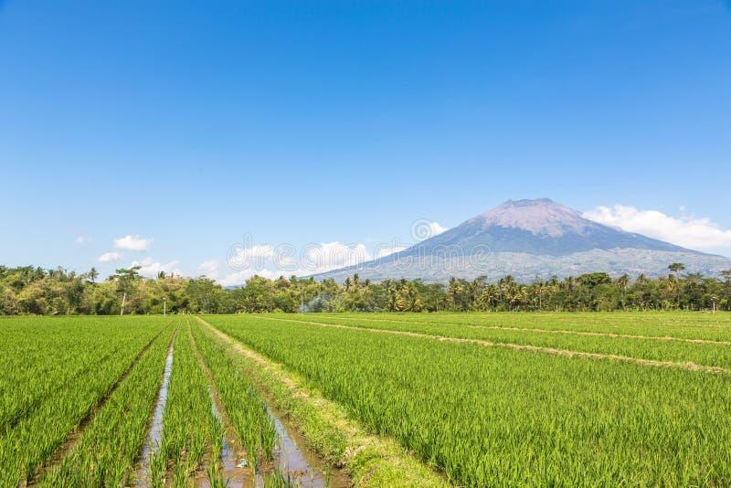 Simbungvulkaan in Java in Indonesië royalty-vrije stock afbeelding