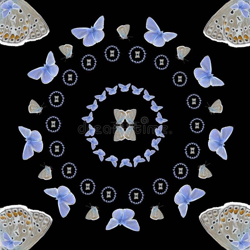 Simetría de Polyommatus Ícaro ilustración del vector