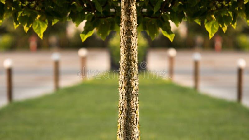 Simetría del árbol fotos de archivo