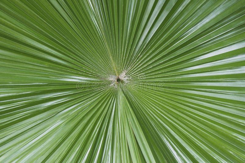 Simetría Tropical De La Hoja Imagen de archivo - Imagen de ...