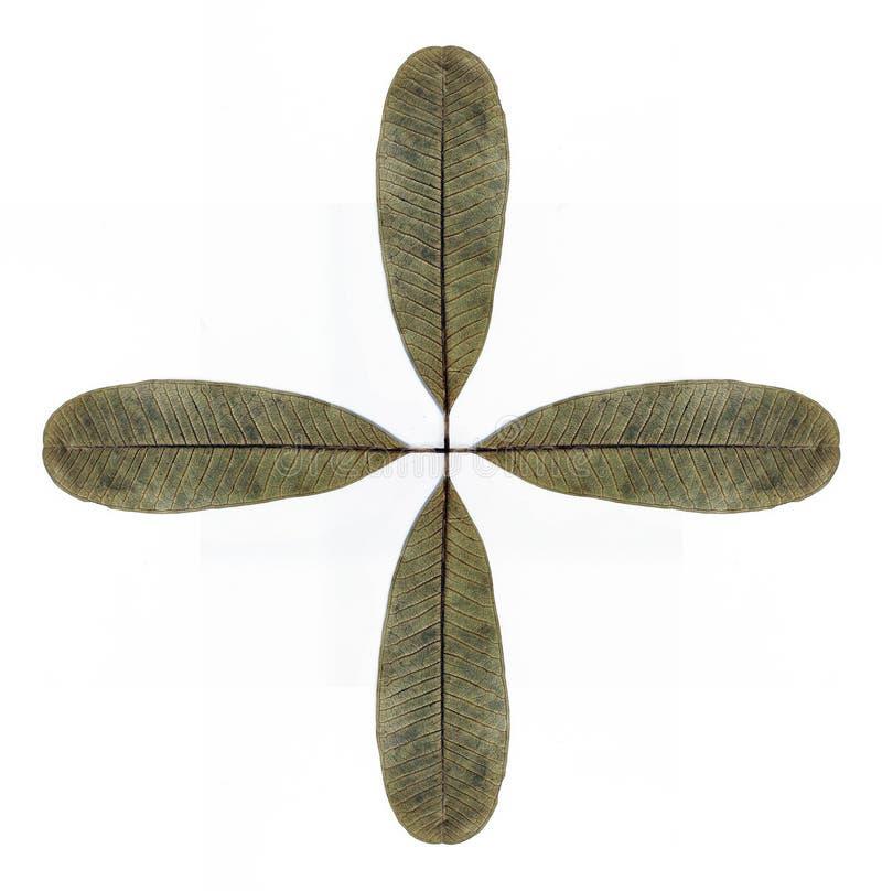 Simetria seca da folha fotos de stock