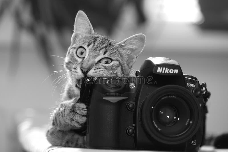 SIMFEROPOL, KRIM, UKRAINE, Juli, lustige Katze 22,2011 mit einer Kamera Rebecca 6 stockbild