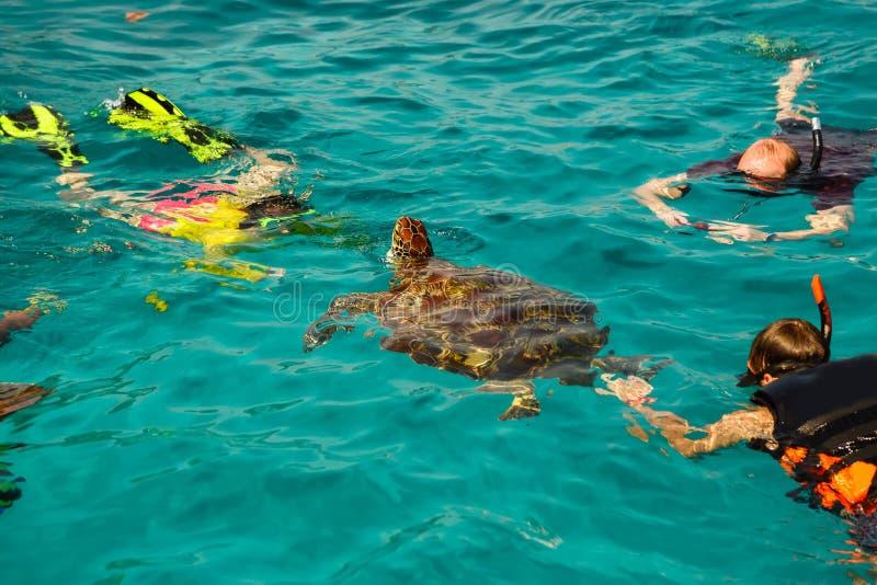 Similan乌龟海岛海滩海 免版税图库摄影
