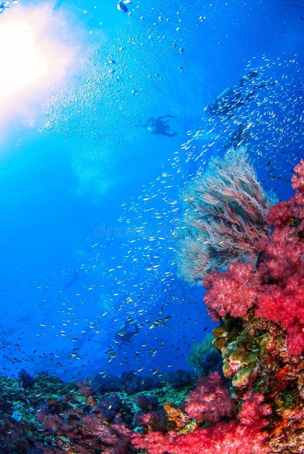 Similan sous-marin Thaïlande images stock