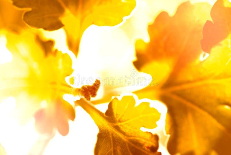 Similar leaf in fantasy