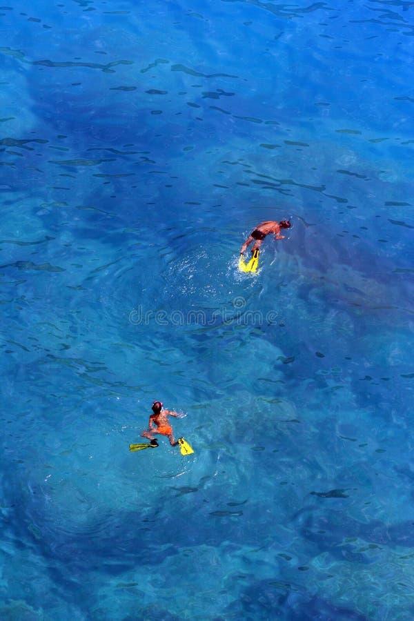 Simma i turkosvatten arkivbilder