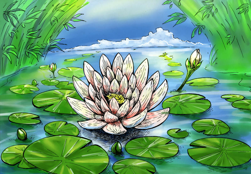 Simmer lily. Hand drawn ink sketch of lily pond with blossoming lily colored