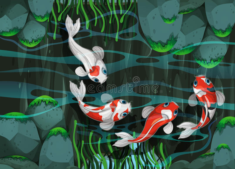 Simning för fyra fisk i dammet royaltyfri illustrationer